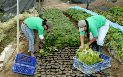 Webinar on unemployment protection mechanisms in Ecuador